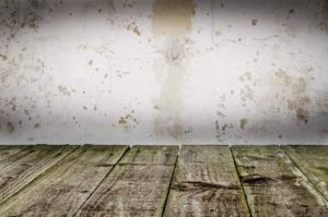 Tulsa Mold Remediation and Restoration Services